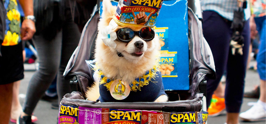 Dog in sunglasses wearing a SPAM can for a hat.